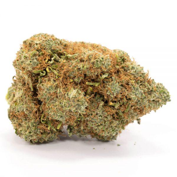 Buy Moby Dick Weed Online Worldwide