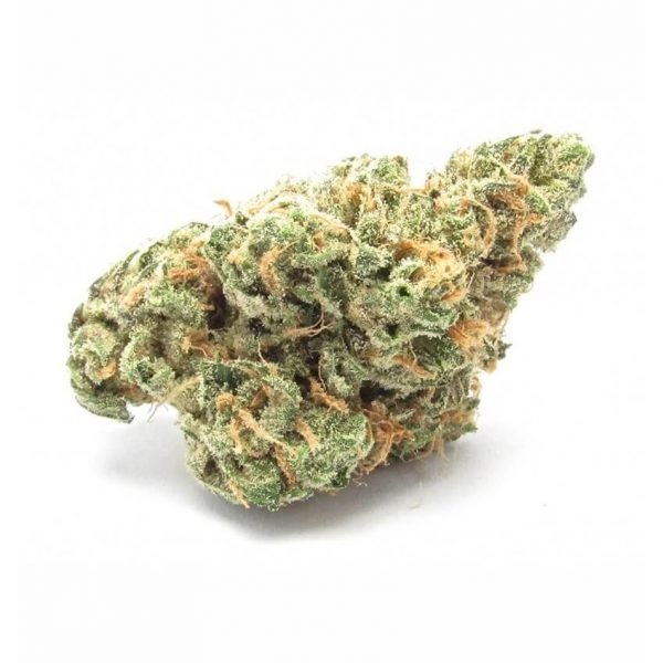 Buy OG Kush Online Worldwide